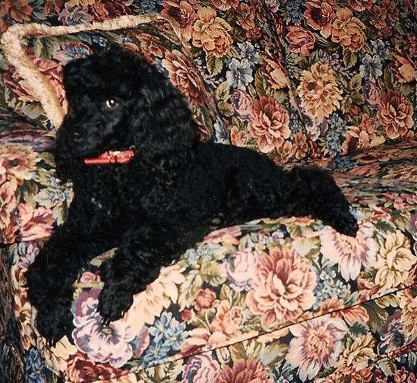 Babette on couch 2