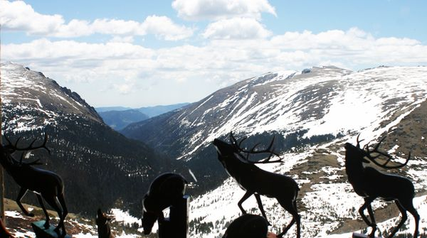 Rocky mtn elk with view