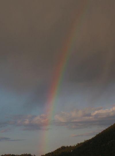 Rocky mtn rainbow