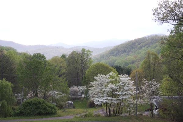 Dogwood and our view