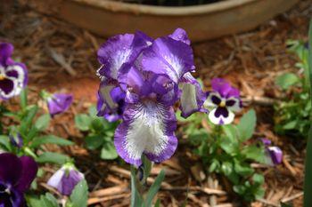 Outdoor weds iris