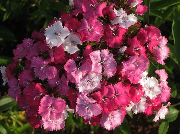 Franklin flowers 6