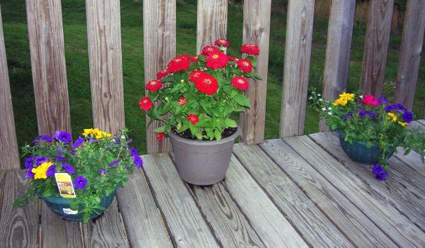 AJ flowers on deck