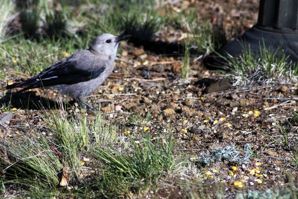 Cabin outdoors bird 2