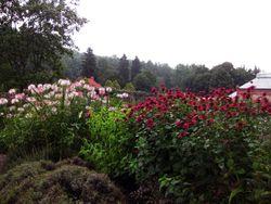 B Gardens 5