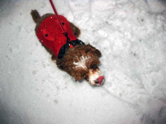 Snow CC