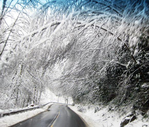 Snow on trees B
