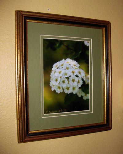 Blue Pat's flower