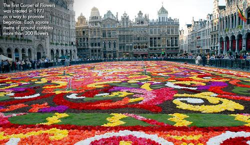 Brussels in bloom 2