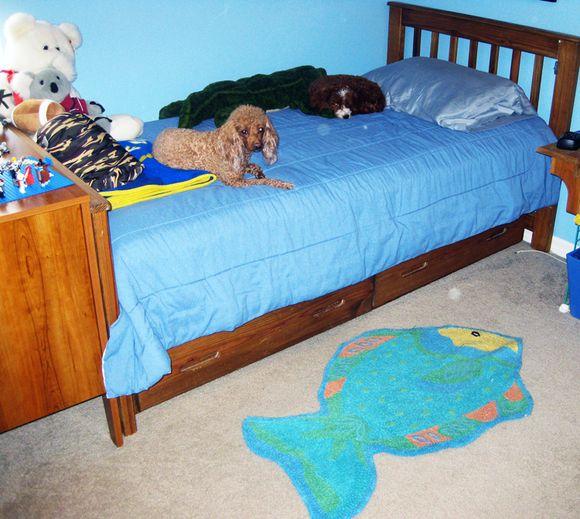 Logans bed