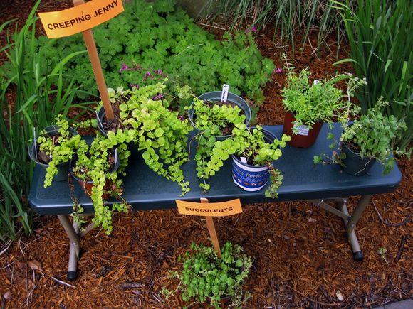 G plants 4 sale