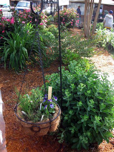 G hanging basket herbs