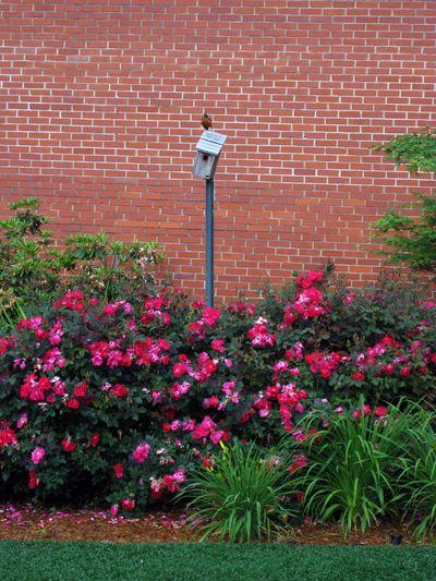 G Garden birdhouse