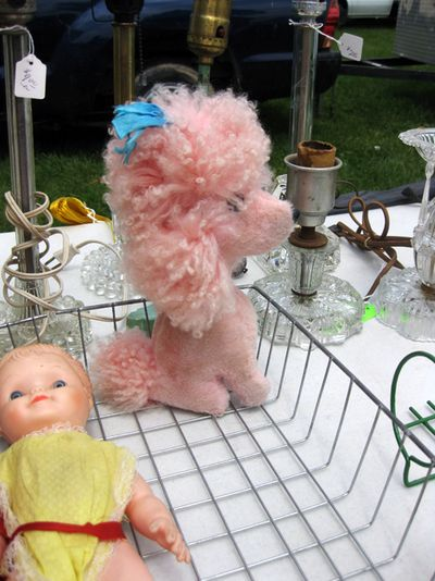 Pink poodle ps21