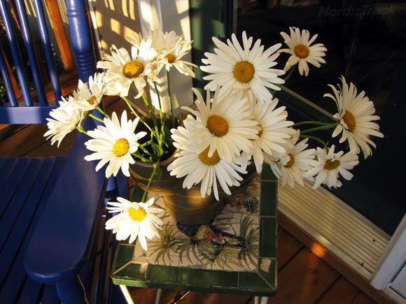Porch closeup daisies