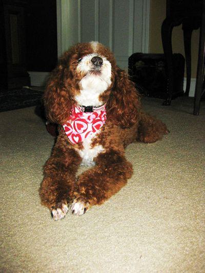 Valentines Cheri' scarf