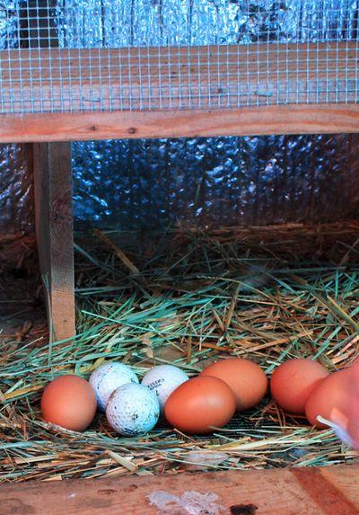 Hen eggsjpg