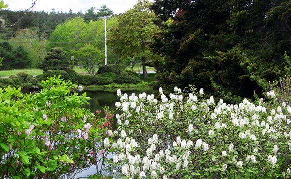 Maine garden part 2 4