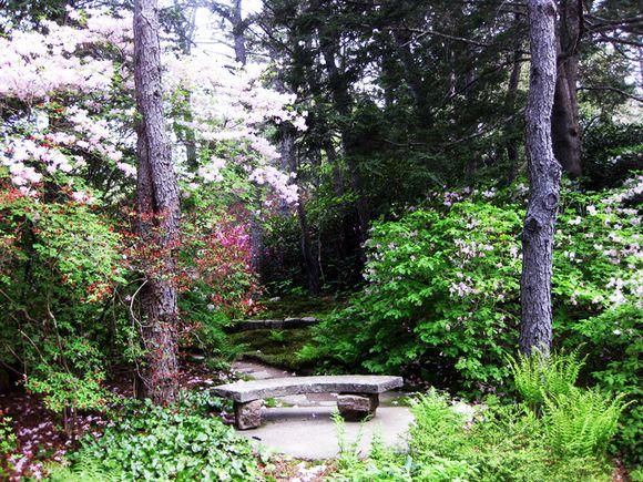 Maine garden part 2 9
