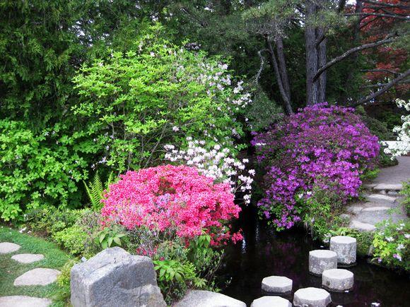 Garden scene in Maine 4