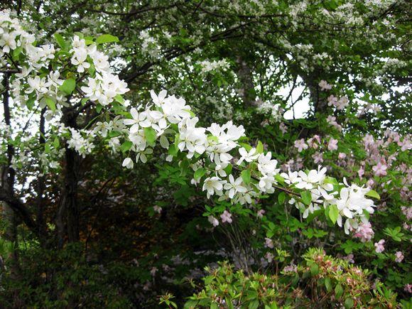 Garden scene Maine 5