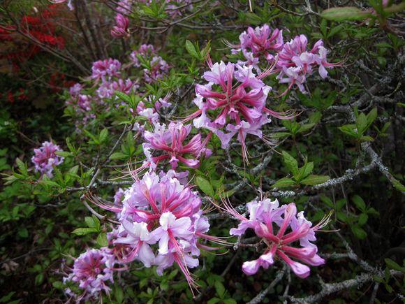 Garden scene Maine 6