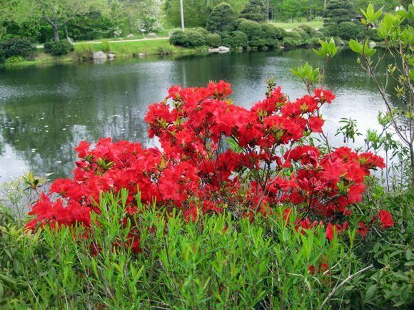 Maine garden part 2 5