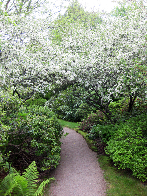 Maine garden part 2 8