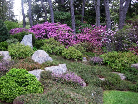 Maine Garden part 2