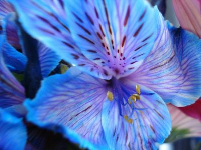 Blue_flower_by_naoangelwings7