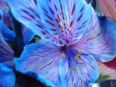 Blue_flower_by_naoangelwings7