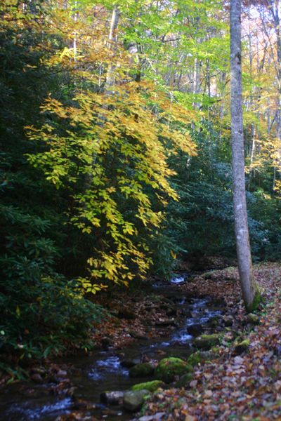 Fall with stream