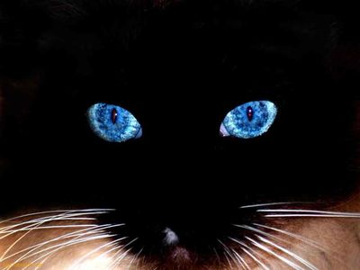 Black-Cat-Blue-Eyes-1-1