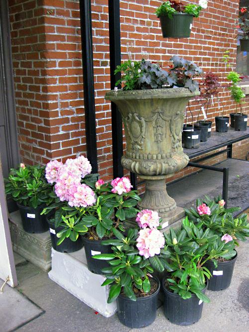 Biltmore garden PS 1