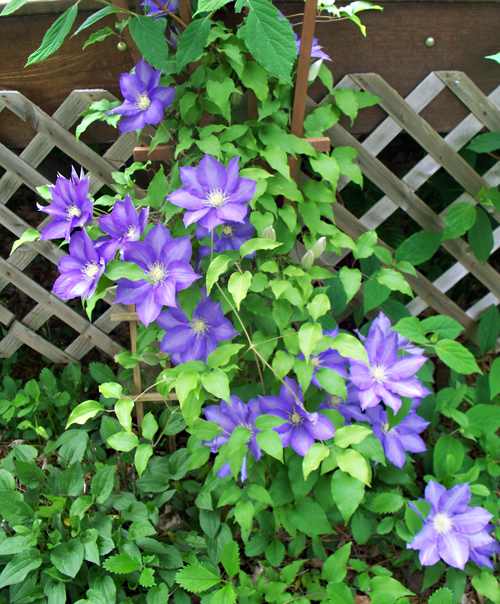 Backyard Neighbor: OUTDOOR FLOWERS AROUND OUR HOME And