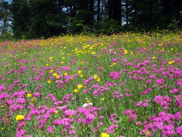 Claudie's flowers 2