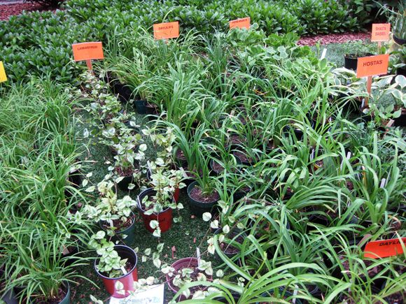 Plant sale various plants