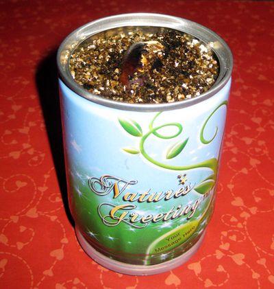 Valentine gift plant
