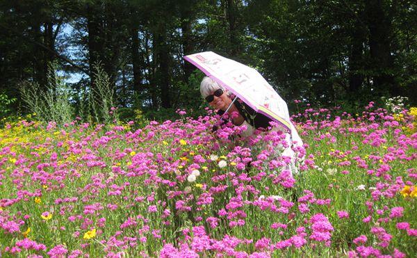Claudie pink flowers