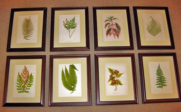 Vintage fern prints