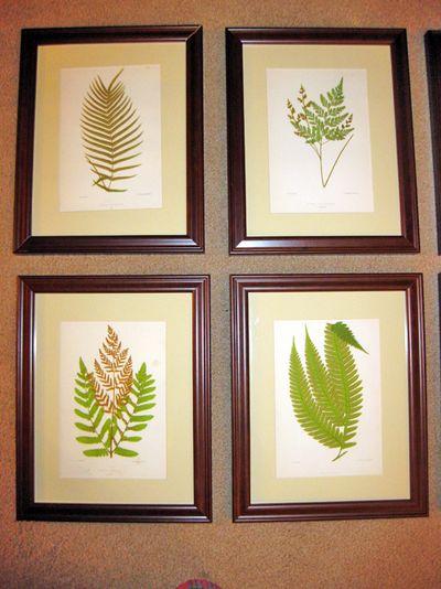 Vintage ferns 2