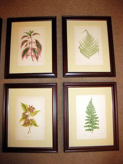 Vintage ferns 3