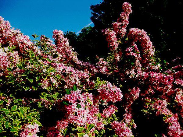 Pinkness wegrlia w sky
