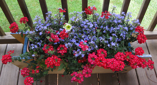 Blue flowers w red