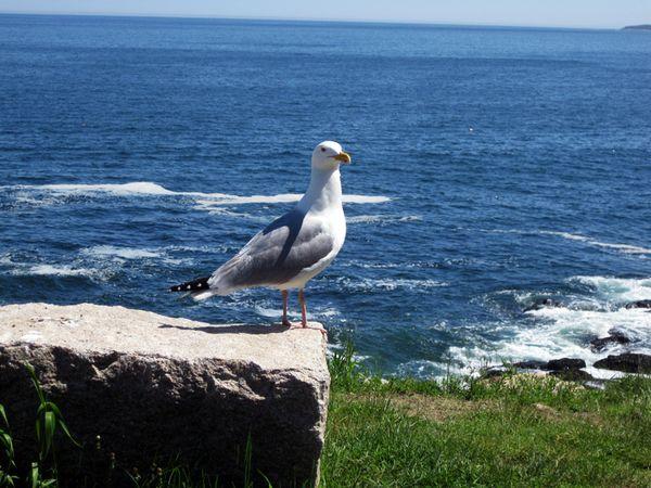 Picnic seagull