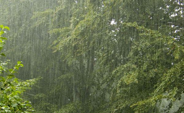 Nature-rain-Photography