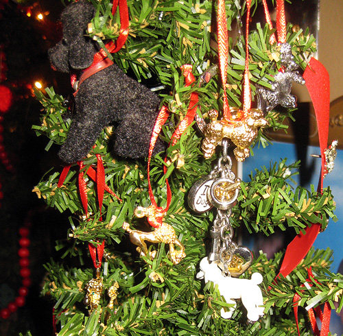 Christmas closeup poodles