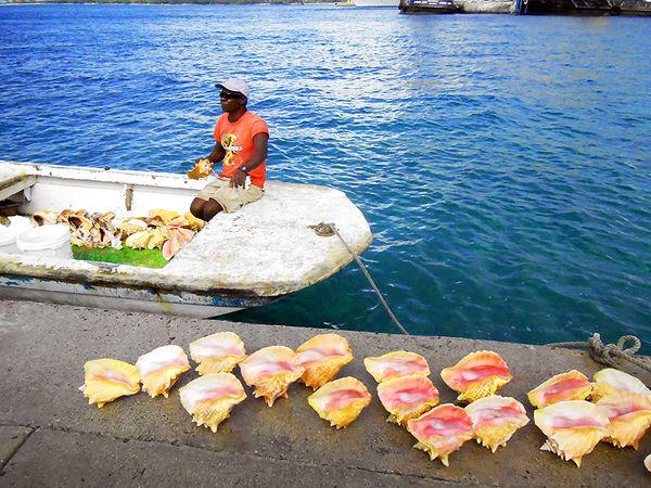 Cruise 2 shells