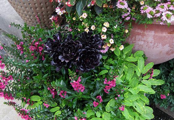 Gardens B 6