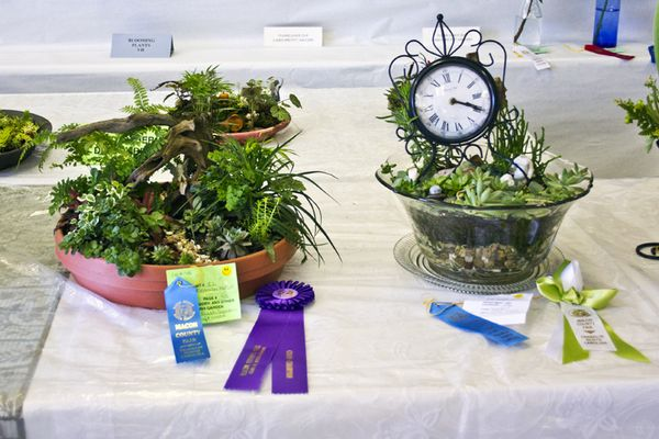 Flower show winners